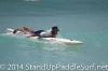 dukes-oceanfest-distance-race-2014-108