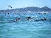 dolphin-paddle-board-race-01