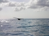 humpback-whale-sighting-10