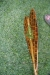Kinimaka Ku Iluna Paddle