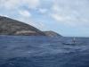 robert-stehlik-at-the-molokai-oahu-race-05